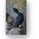 Bird perched on ridge wall.