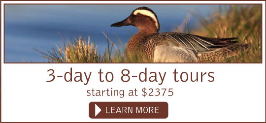 3-day to 8-day tours